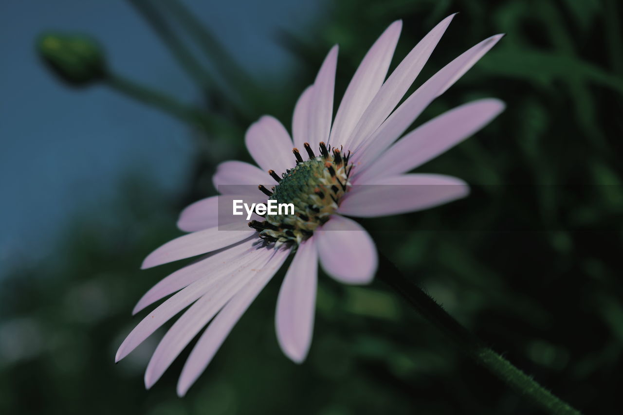 flower, flowering plant, fragility, vulnerability, beauty in nature, petal, growth, plant, flower head, freshness, inflorescence, close-up, one animal, pollen, invertebrate, insect, animals in the wild, animal, focus on foreground, animal themes, no people, pollination, purple