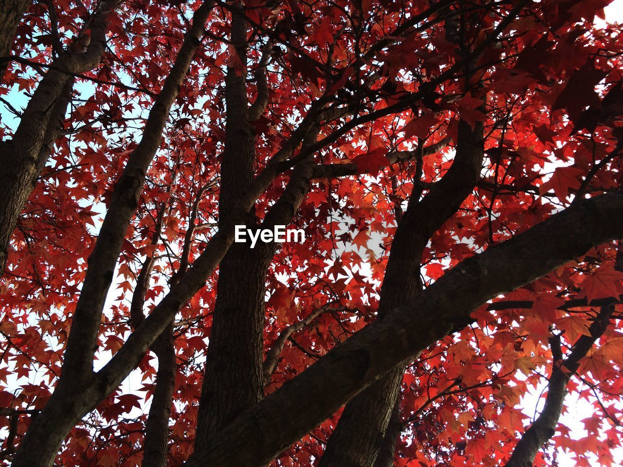 tree, nature, branch, beauty in nature, growth, low angle view, tree trunk, no people, outdoors, day, tranquility, autumn, tranquil scene, scenics, forest, backgrounds, sky