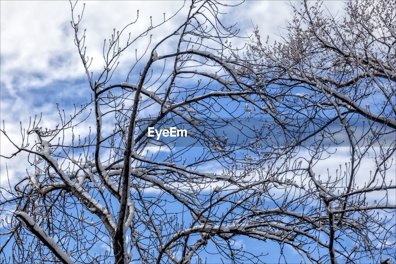 branch, bare tree, low angle view, tree, nature, sky, beauty in nature, no people, day, outdoors, tranquility, scenics