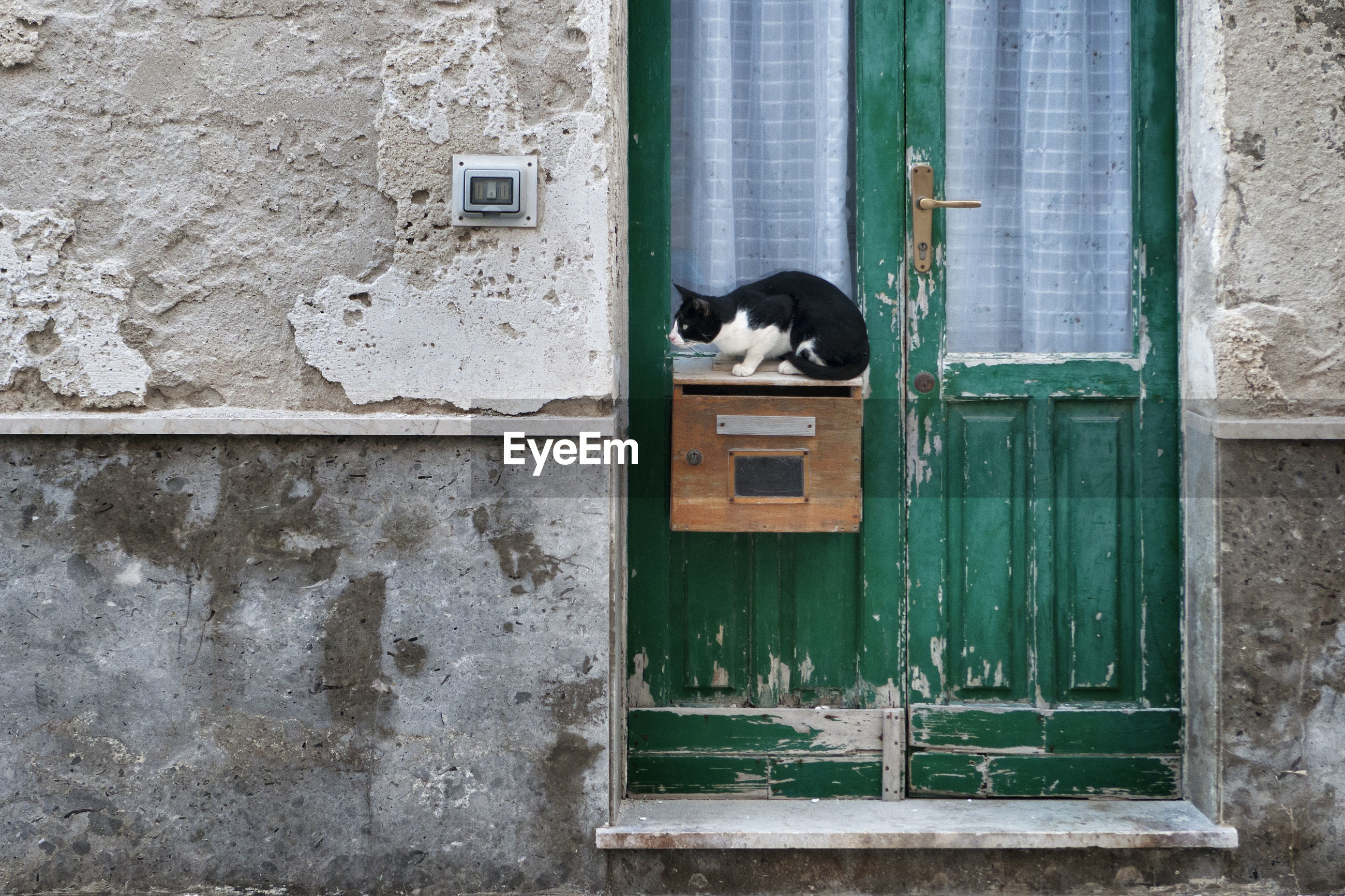 VIEW OF A CAT WITH CLOSED WINDOW