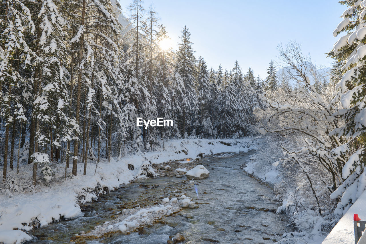 snow, cold temperature, winter, tree, nature, beauty in nature, plant, covering, white color, tranquility, frozen, day, no people, tranquil scene, scenics - nature, land, sky, non-urban scene, water, outdoors