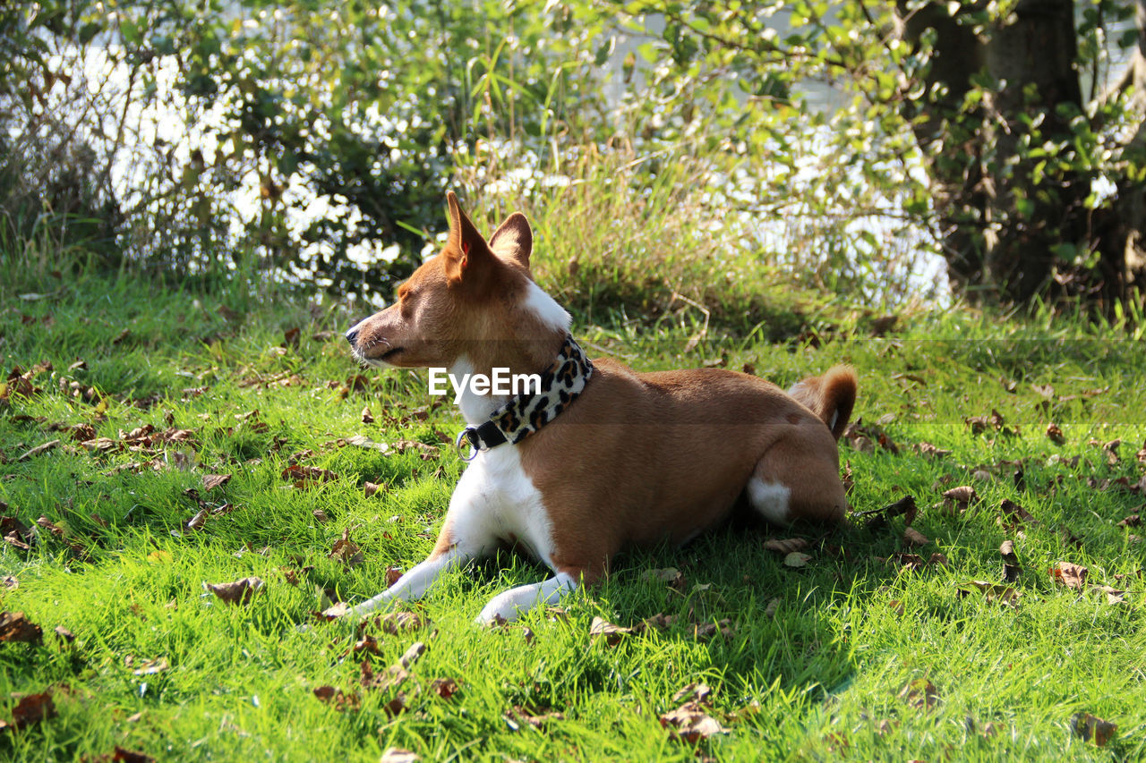 mammal, animal themes, animal, one animal, pets, domestic, plant, domestic animals, vertebrate, canine, dog, land, grass, field, nature, day, no people, green color, growth, looking, outdoors