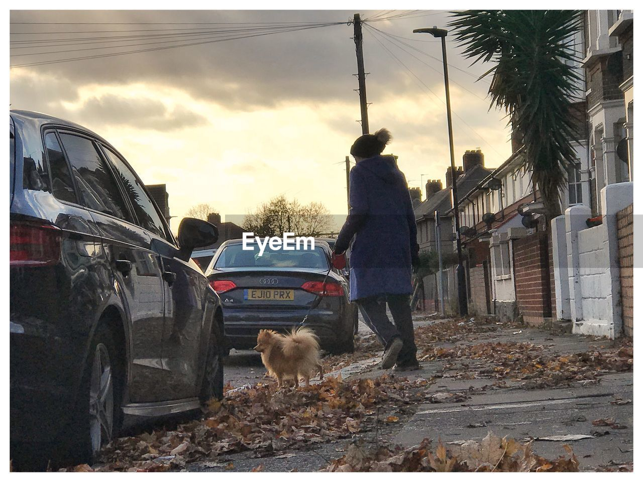pets, car, one person, one animal, dog, full length, domestic animals, real people, outdoors, transportation, men, sky, day, standing, mammal, tree, one man only, nature, adult, people