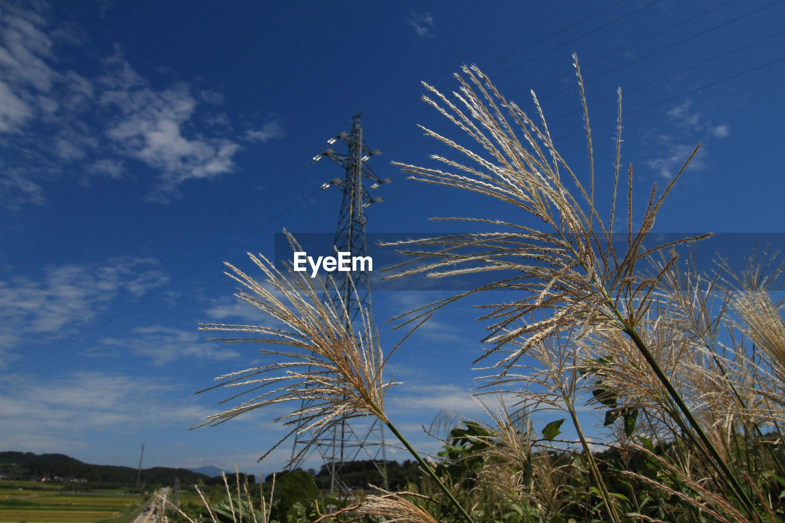 Low angle view of plants and electricity pylons against blue sky