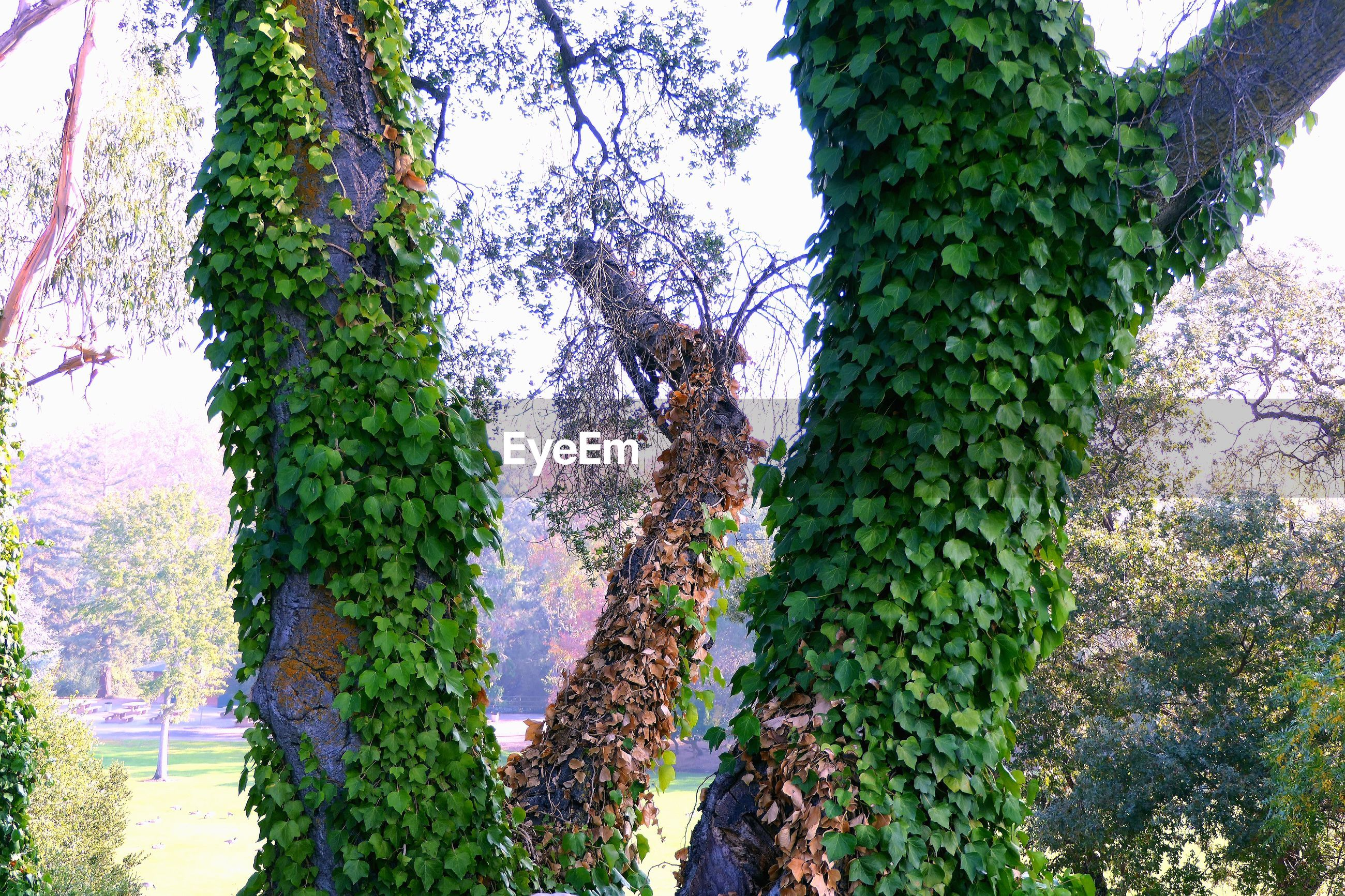LOW ANGLE VIEW OF FRESH GREEN TREE
