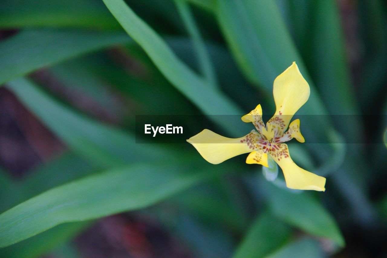 plant, growth, yellow, leaf, plant part, close-up, beauty in nature, flowering plant, nature, flower, day, flower head, focus on foreground, inflorescence, no people, selective focus, fragility, vulnerability, petal, green color, outdoors, leaves
