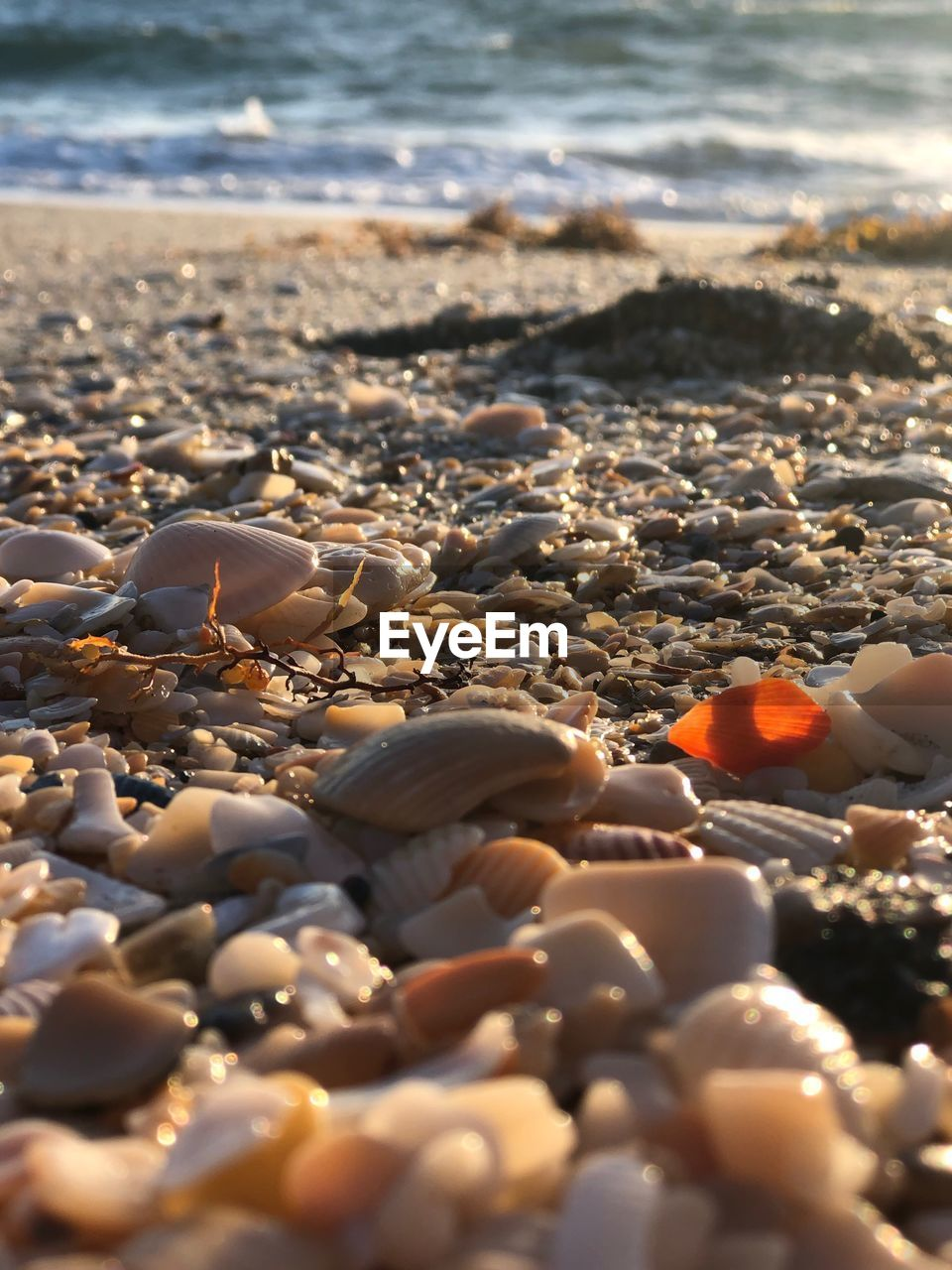 beach, land, sea, water, sand, nature, no people, selective focus, shell, pebble, day, sunlight, stone, solid, stone - object, rock, close-up, surface level, beauty in nature, outdoors, marine, pollution