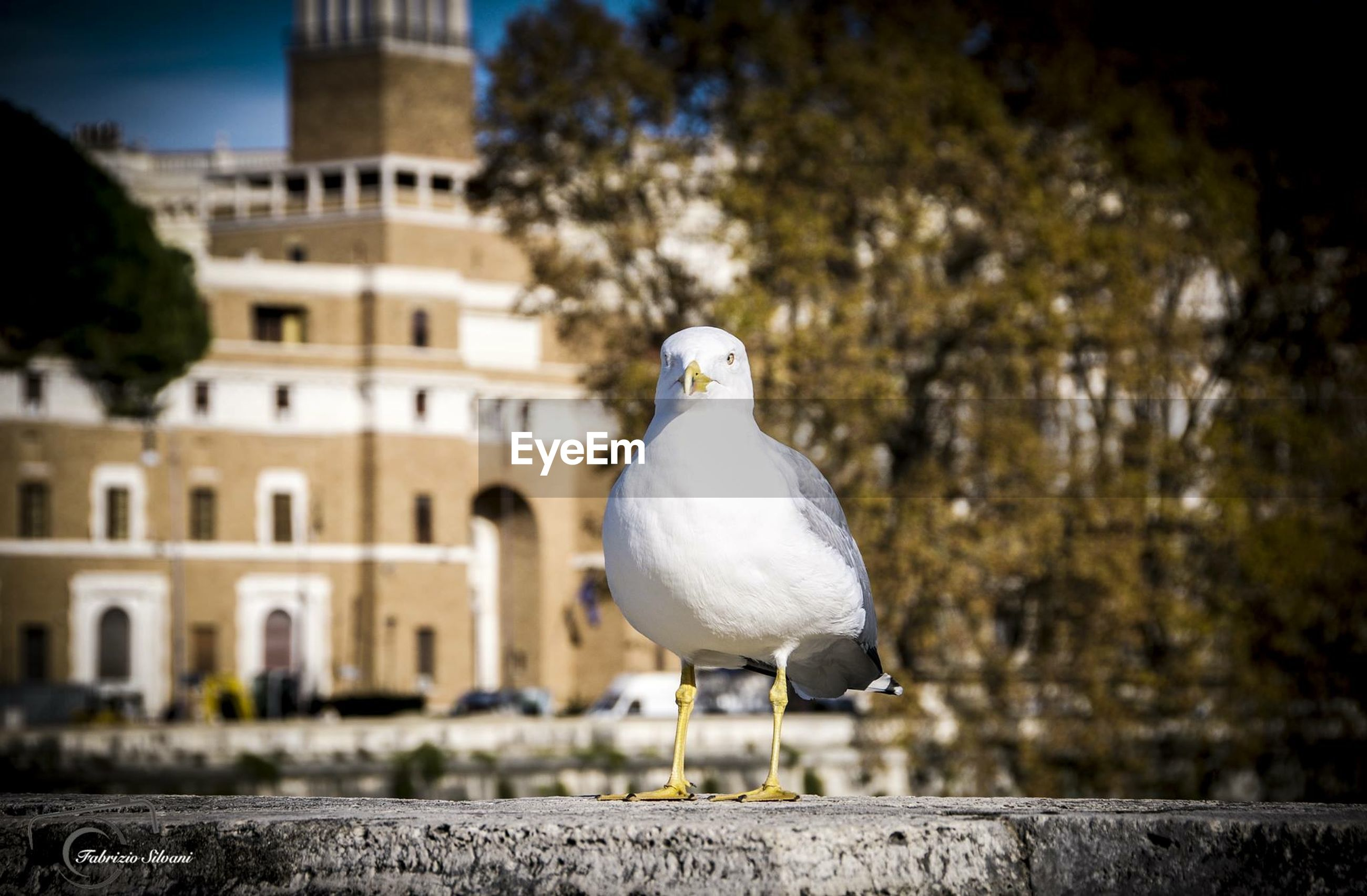 bird, building exterior, architecture, built structure, animal themes, one animal, animals in the wild, pigeon, wildlife, perching, focus on foreground, tree, seagull, city, day, outdoors, statue, sculpture, no people, full length