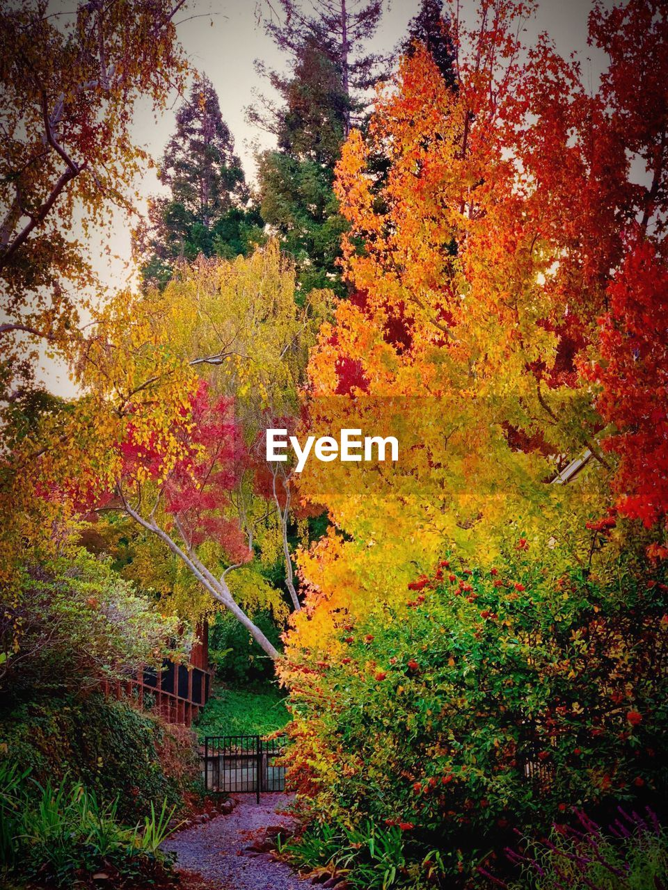 autumn, change, tree, plant, beauty in nature, growth, orange color, nature, no people, day, tranquility, outdoors, architecture, yellow, tranquil scene, built structure, leaf, red, plant part, scenics - nature, fall, autumn collection
