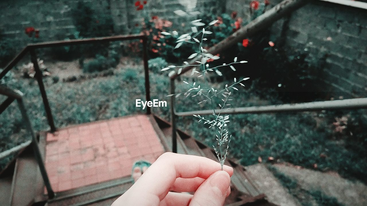 human hand, hand, human body part, one person, real people, holding, personal perspective, focus on foreground, architecture, body part, day, finger, unrecognizable person, human finger, outdoors, plant, nature, lifestyles, close-up