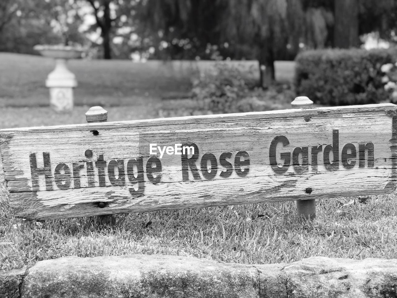 text, communication, western script, day, no people, grass, focus on foreground, plant, park, nature, cemetery, outdoors, information, grave, tree, park - man made space, close-up, wood - material, sign, water, message