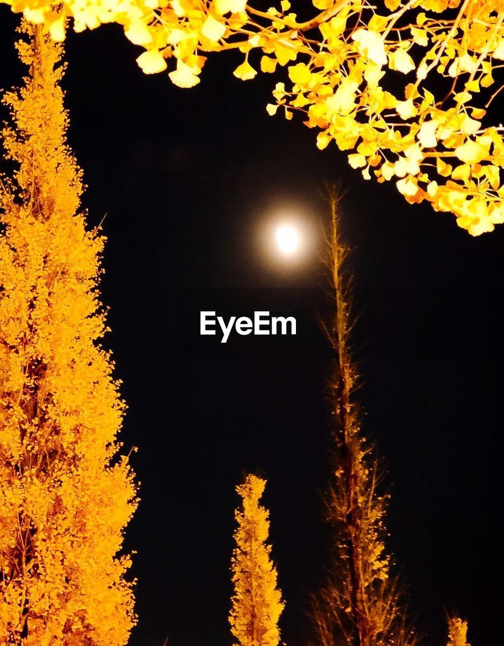 tree, moon, nature, beauty in nature, night, no people, low angle view, outdoors, illuminated, scenics, tranquility, yellow, growth, sky, flower, close-up, astronomy
