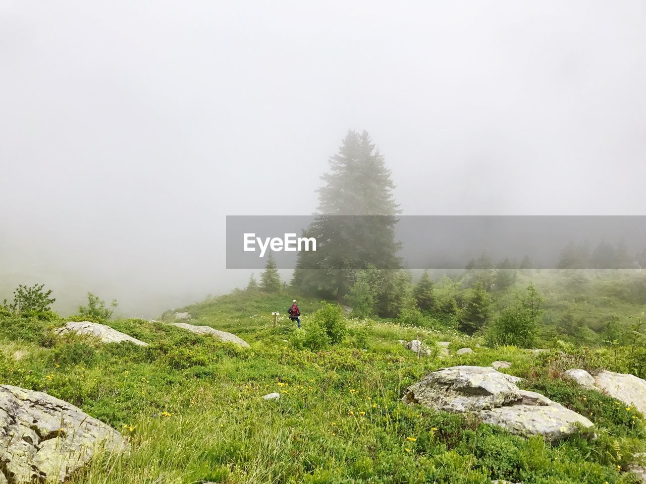 Rear View Of Hiker Standing On Grassy Field During Foggy Weather