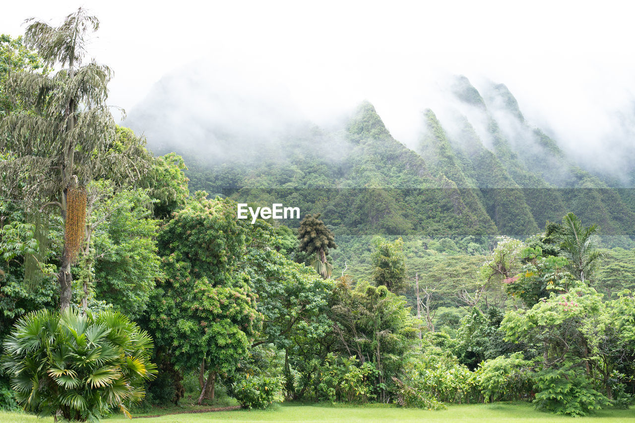 plant, tree, beauty in nature, green color, nature, scenics - nature, fog, environment, land, non-urban scene, day, tranquil scene, mountain, growth, forest, landscape, tranquility, no people, remote, outdoors, rainforest