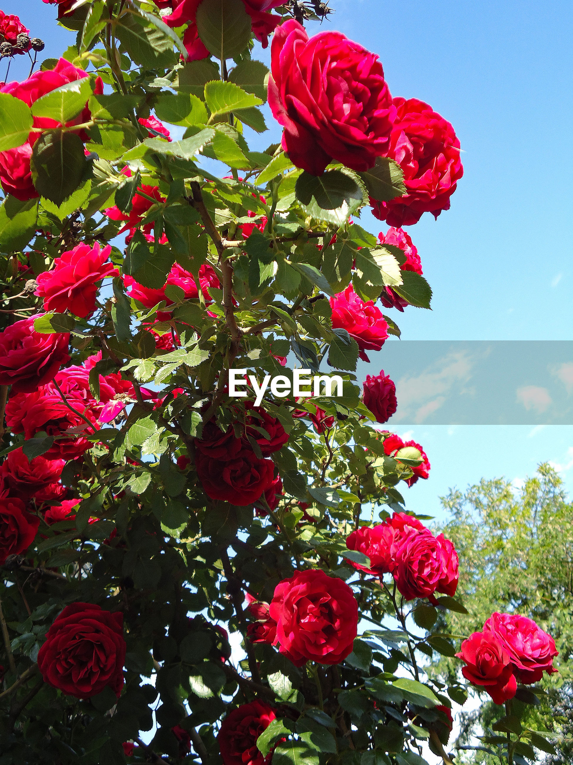 red, growth, freshness, beauty in nature, flower, nature, no people, day, close-up, outdoors, tree, sky, fragility