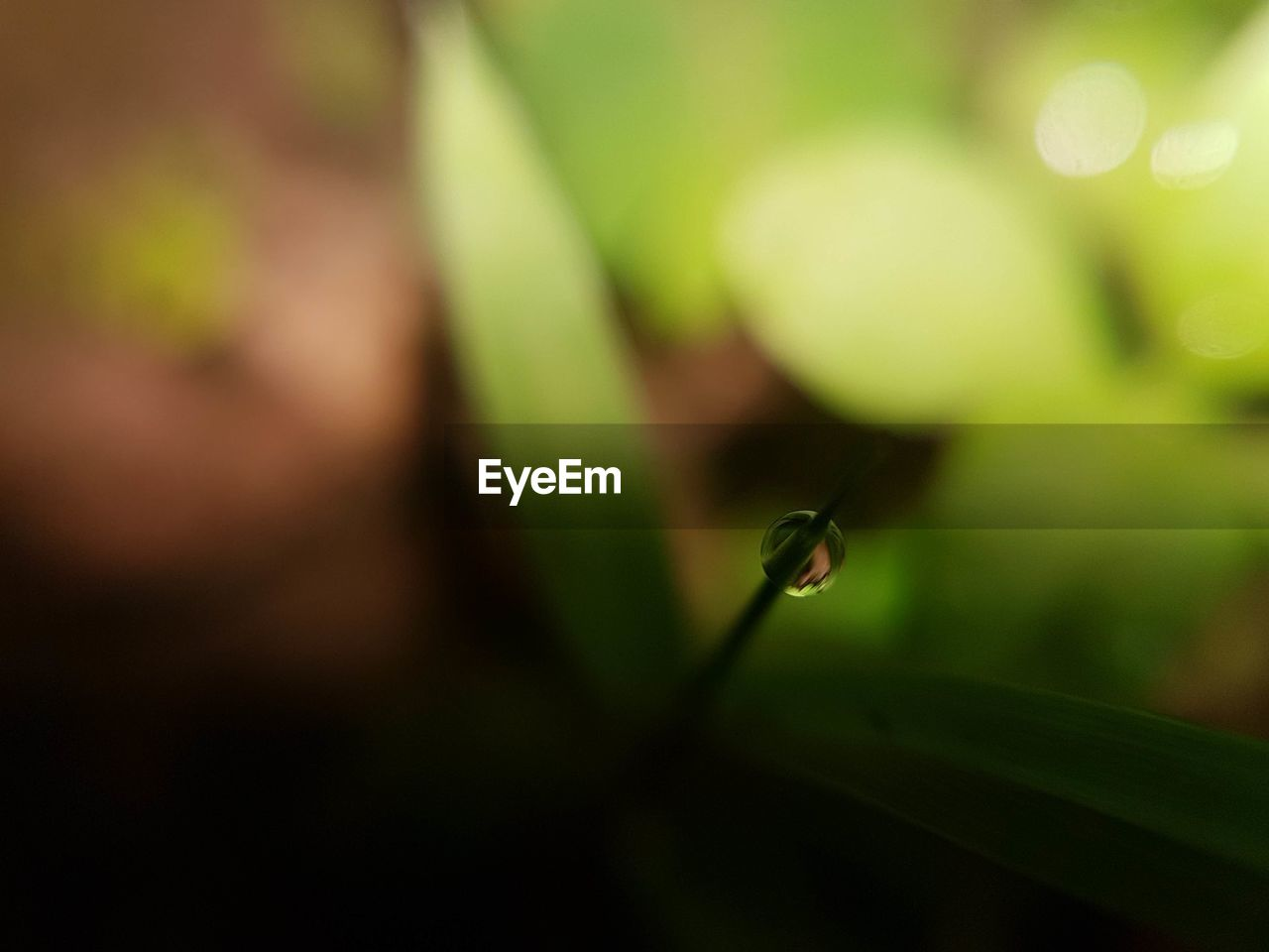one animal, animals in the wild, green color, animal themes, insect, nature, selective focus, close-up, no people, focus on foreground, day, growth, animal wildlife, leaf, outdoors, beauty in nature, damselfly