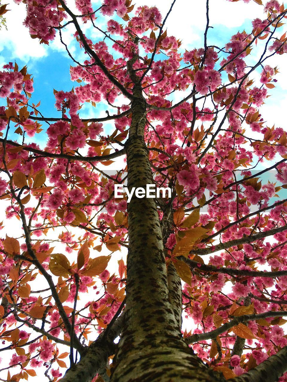 tree, low angle view, growth, branch, beauty in nature, nature, no people, day, tree trunk, outdoors, pink color, sky, flower, scenics, springtime, fragility, close-up, freshness