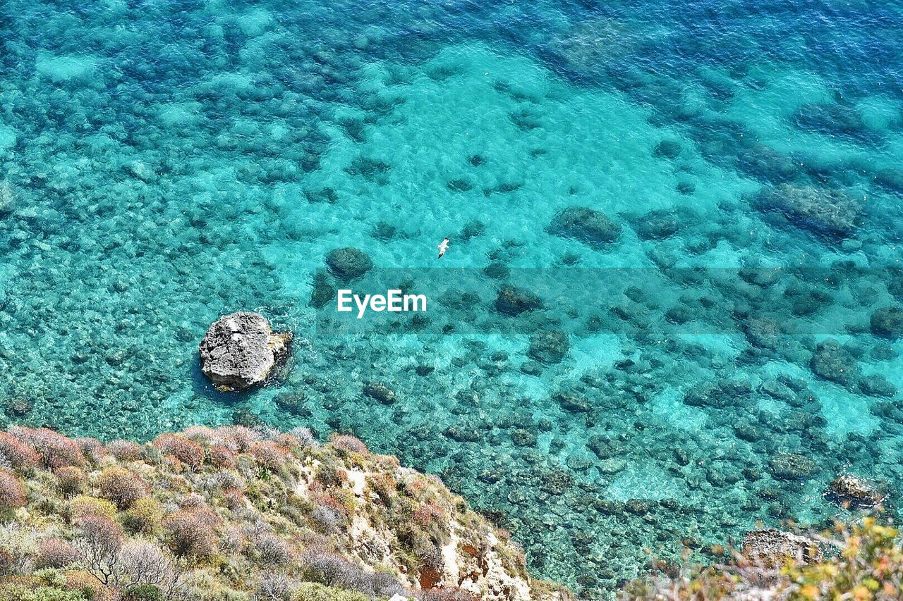 water, sea, nature, sea life, beauty in nature, high angle view, solid, land, no people, rock, tranquility, animal wildlife, underwater, rock - object, coral, undersea, animals in the wild, scenics - nature, day, turquoise colored, marine, outdoors