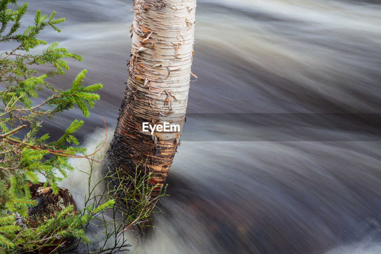 water, motion, nature, no people, plant, day, blurred motion, tree, sea, outdoors, wood - material, high angle view, tree trunk, trunk, beauty in nature, focus on foreground, close-up, tranquility, selective focus, wooden post