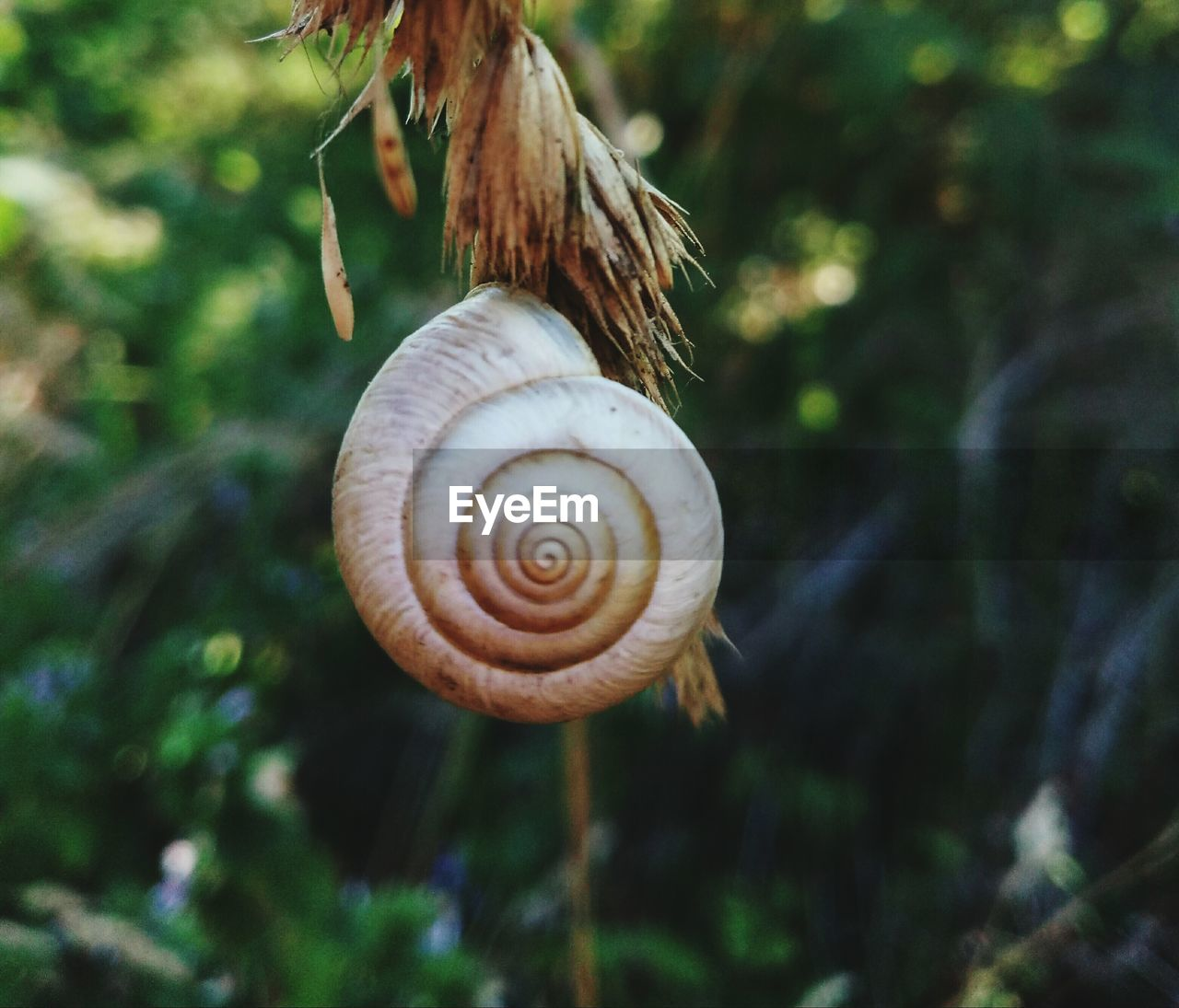 snail, gastropod, animal shell, animal themes, one animal, nature, wildlife, animals in the wild, spiral, day, outdoors, focus on foreground, fragility, no people, close-up, beauty in nature, tree