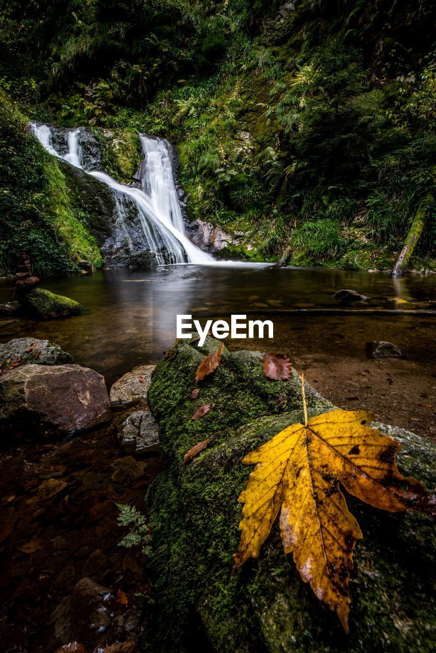 Autumn leaf on mossy rock with waterfall in background