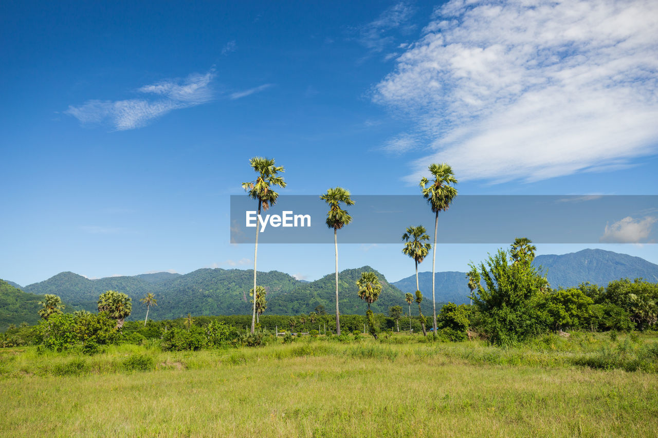 Scenic View Of Grassy With Mountains In Background