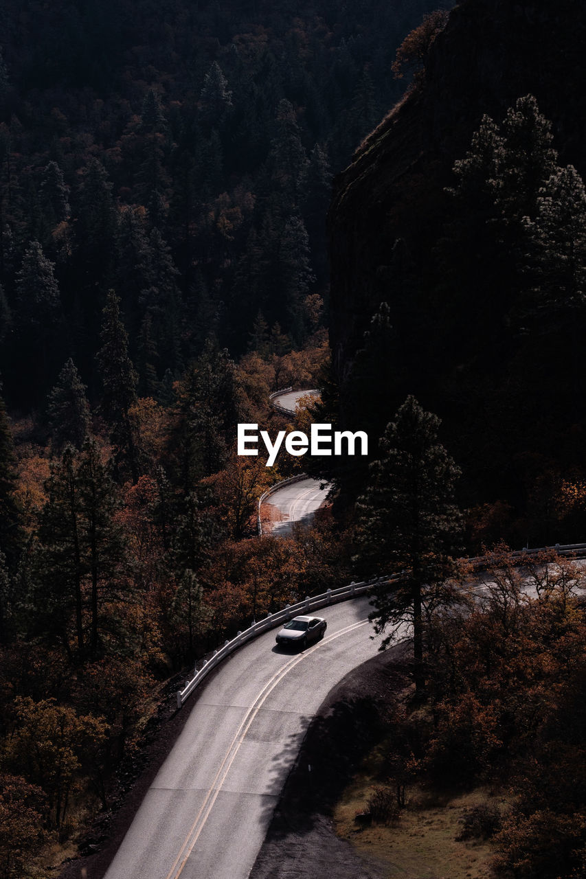 Car On Road Amidst Trees
