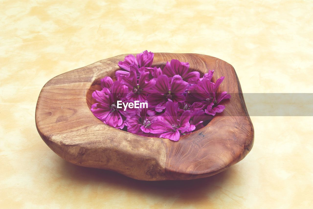 flower, petal, purple, close-up, freshness, no people, wood - material, studio shot, nature, flower head, fragility, beauty in nature, indoors, day