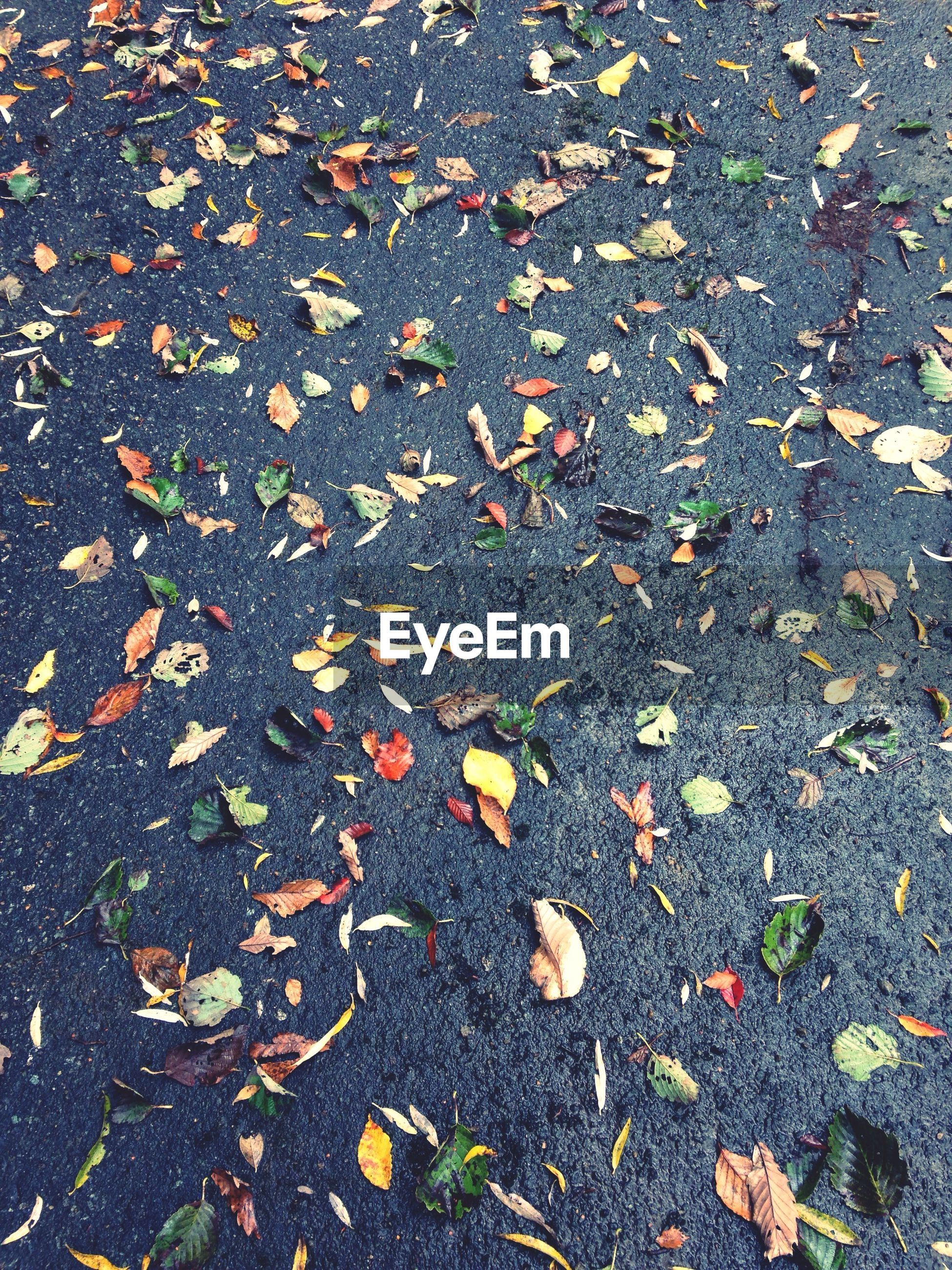 autumn, leaf, change, high angle view, fallen, dry, season, leaves, nature, asphalt, grass, street, falling, field, ground, yellow, day, outdoors, maple leaf, no people