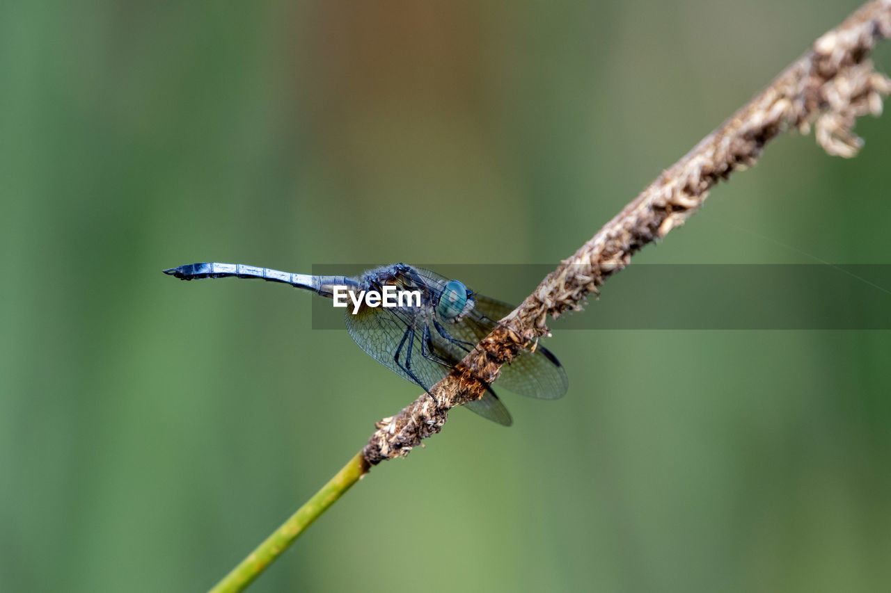 animals in the wild, one animal, animal, animal themes, animal wildlife, focus on foreground, day, plant, close-up, no people, bird, nature, vertebrate, beauty in nature, invertebrate, perching, outdoors, insect, twig, kingfisher, animal wing