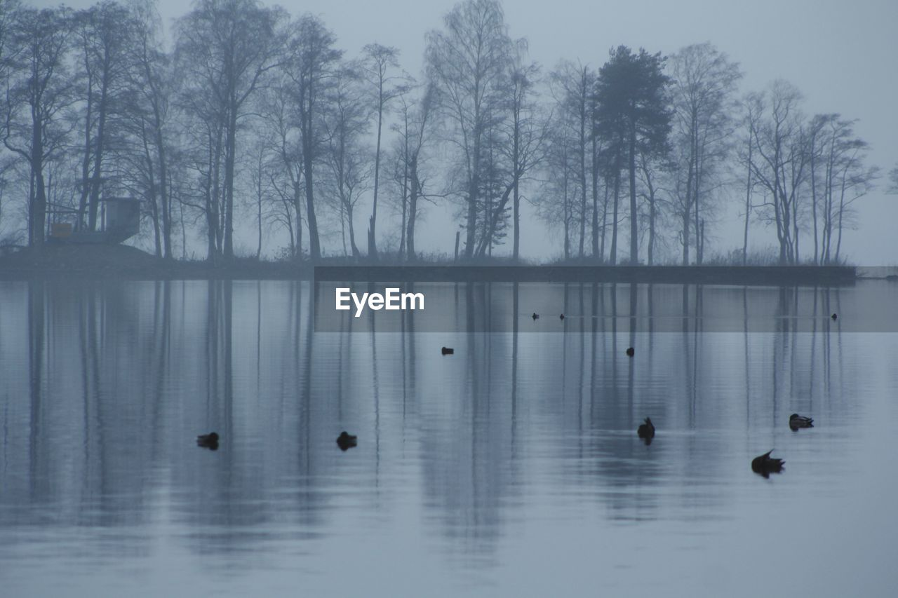 water, tree, lake, beauty in nature, waterfront, nature, animal themes, animal wildlife, reflection, animals in the wild, animal, tranquility, no people, duck, vertebrate, bird, fog, swimming, outdoors, floating on water