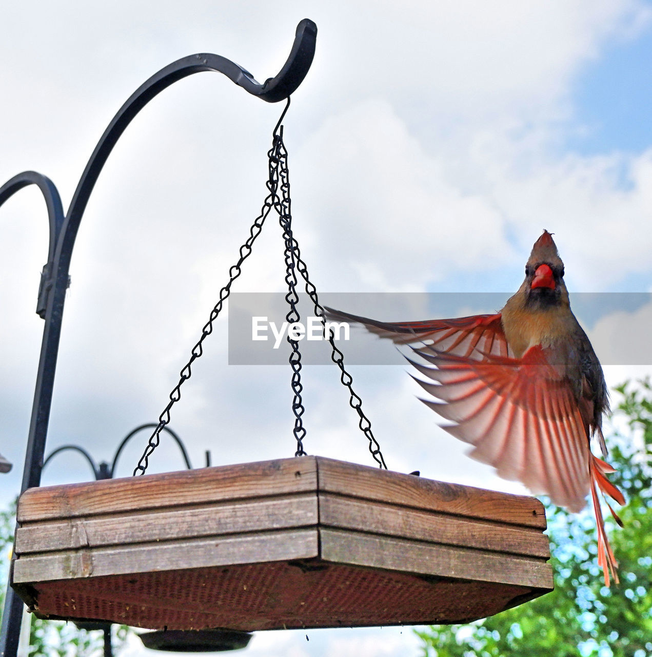 bird, vertebrate, animal themes, animal, animals in the wild, animal wildlife, one animal, perching, low angle view, focus on foreground, no people, cloud - sky, sky, metal, day, nature, architecture, outdoors, built structure, roof