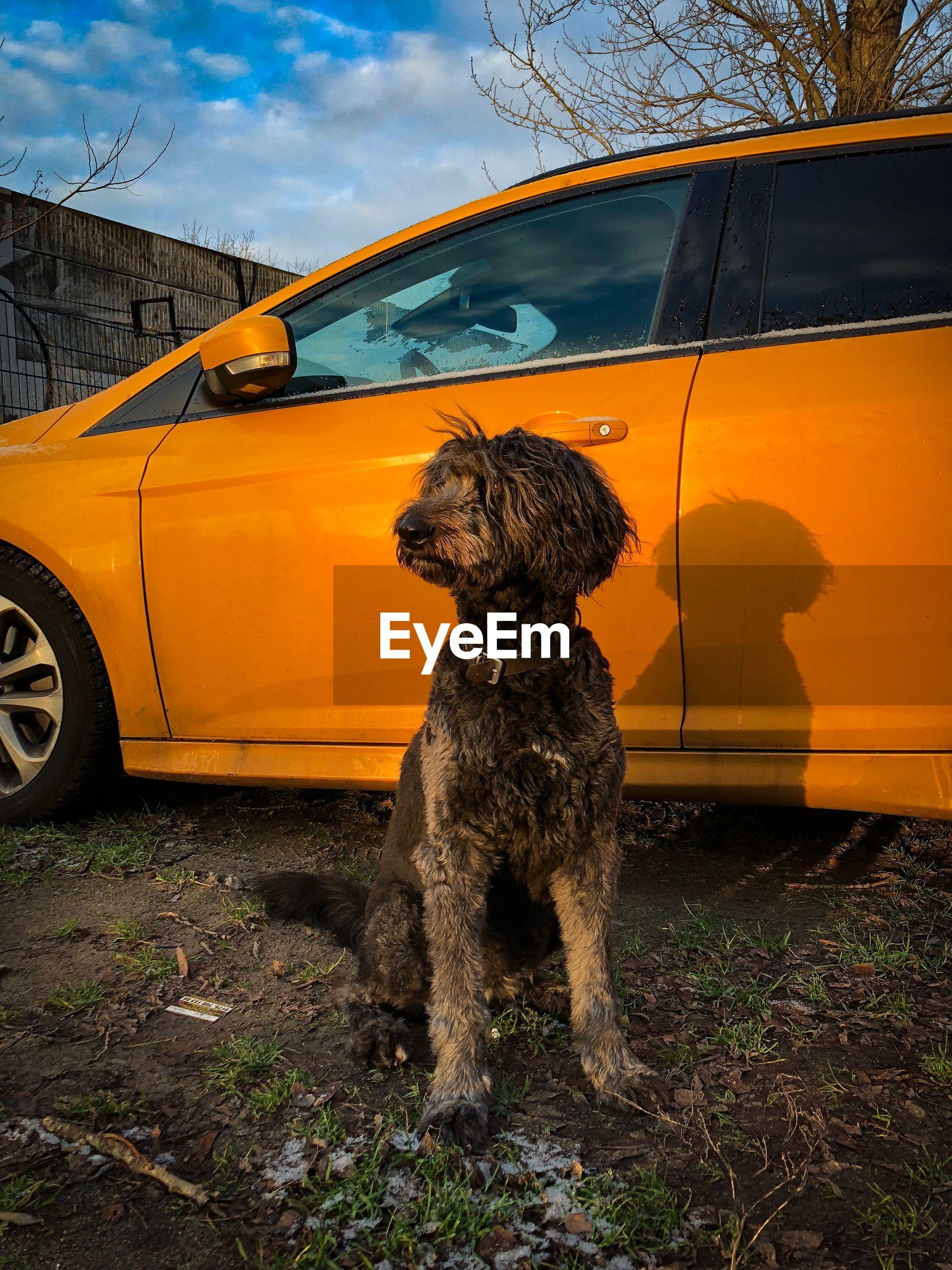 DOG ON CAR AGAINST SKY