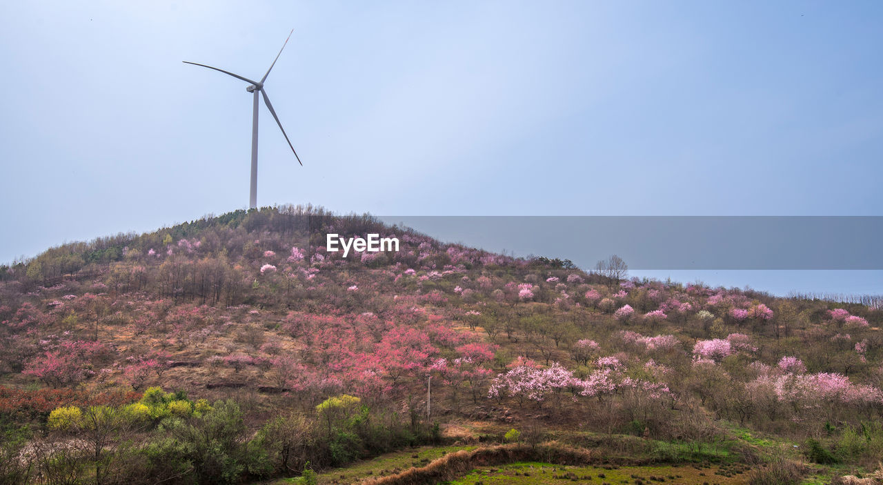 fuel and power generation, environment, wind turbine, environmental conservation, sky, flower, renewable energy, alternative energy, beauty in nature, plant, turbine, field, landscape, wind power, land, nature, flowering plant, growth, scenics - nature, day, no people, outdoors, purple, sustainable resources