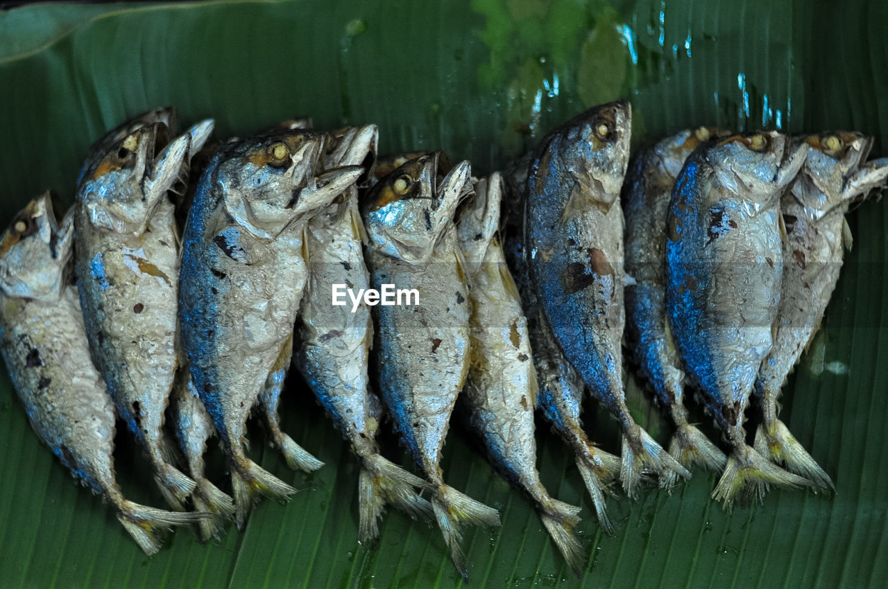 HIGH ANGLE VIEW OF FISH IN CONTAINER ON TABLE