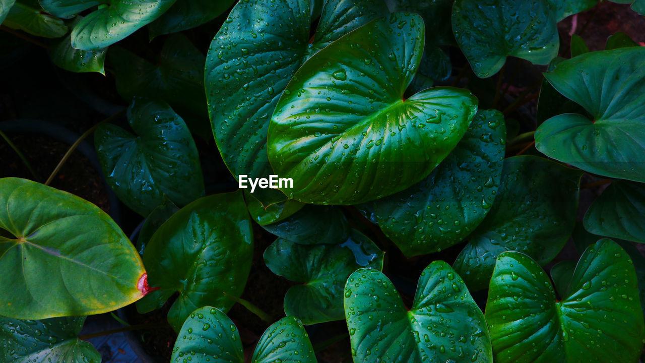 Full frame shot of green leaves texture