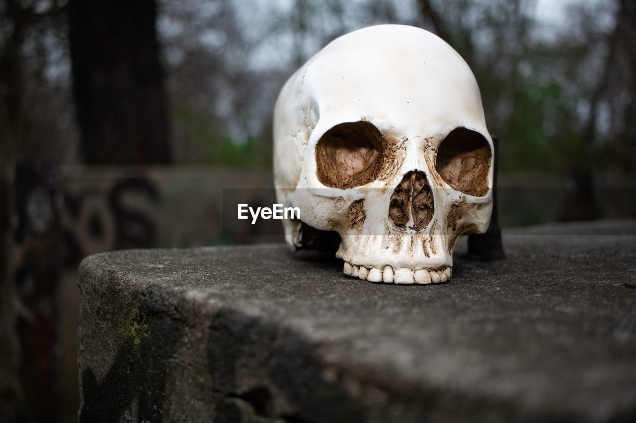 bone, no people, human skeleton, close-up, white color, selective focus, day, history, focus on foreground, the past, architecture, sport, single object, soccer, ball, spooky, skull