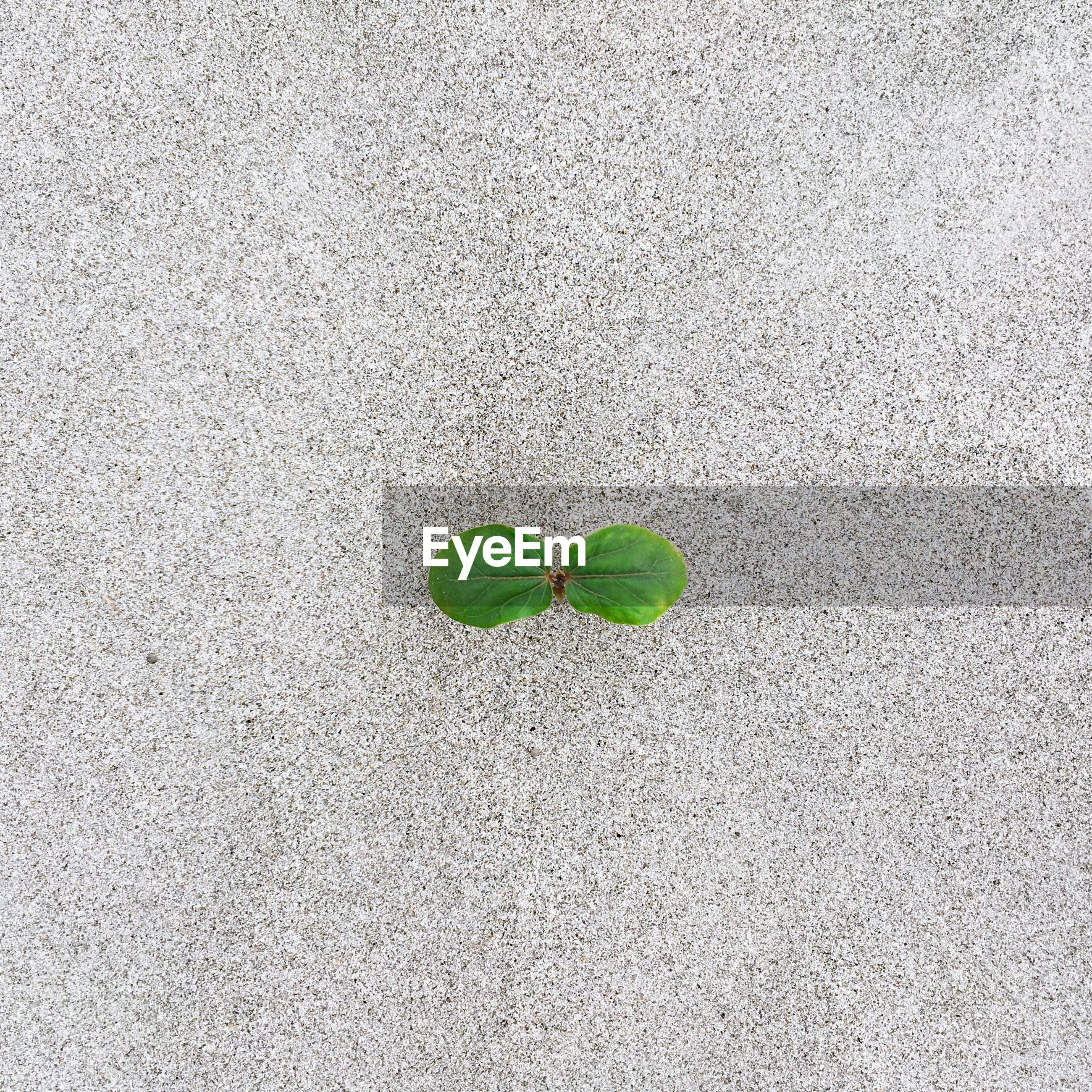 HIGH ANGLE VIEW OF PLANT ON LEAF