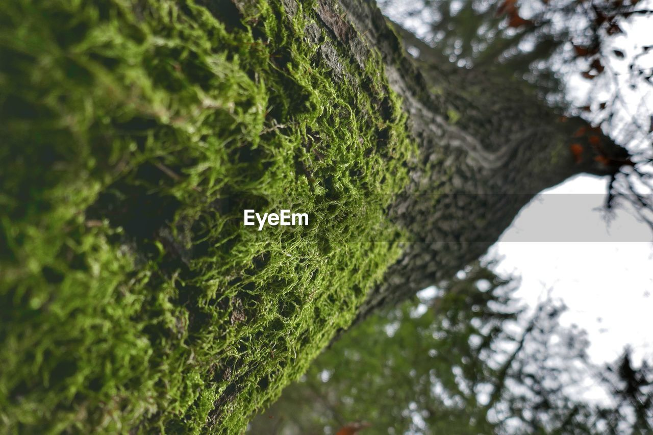 tree, growth, nature, day, tree trunk, outdoors, green color, beauty in nature, focus on foreground, low angle view, branch, tranquility, no people, close-up, water, sky, freshness