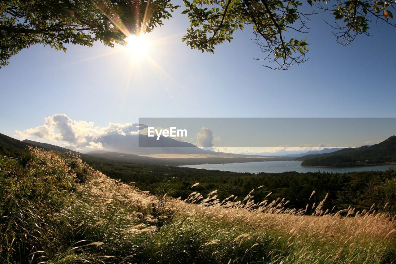 sun, sunbeam, sunlight, nature, lens flare, beauty in nature, scenics, tree, tranquility, tranquil scene, day, outdoors, no people, sky, landscape, mountain, grass, water, animal themes