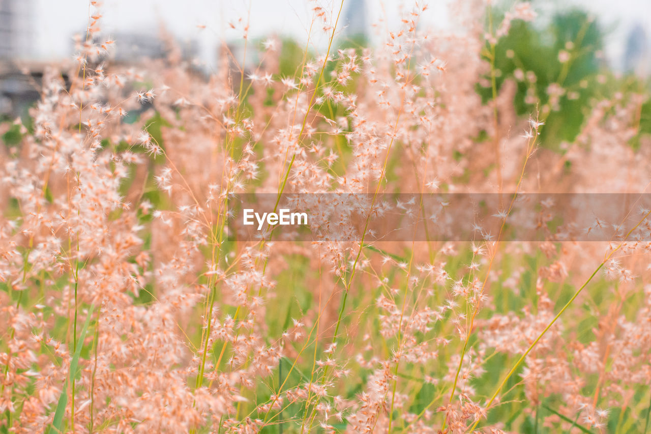 growth, plant, beauty in nature, close-up, nature, selective focus, flowering plant, day, no people, flower, freshness, vulnerability, fragility, field, tranquility, land, outdoors, focus on foreground, botany, plant stem