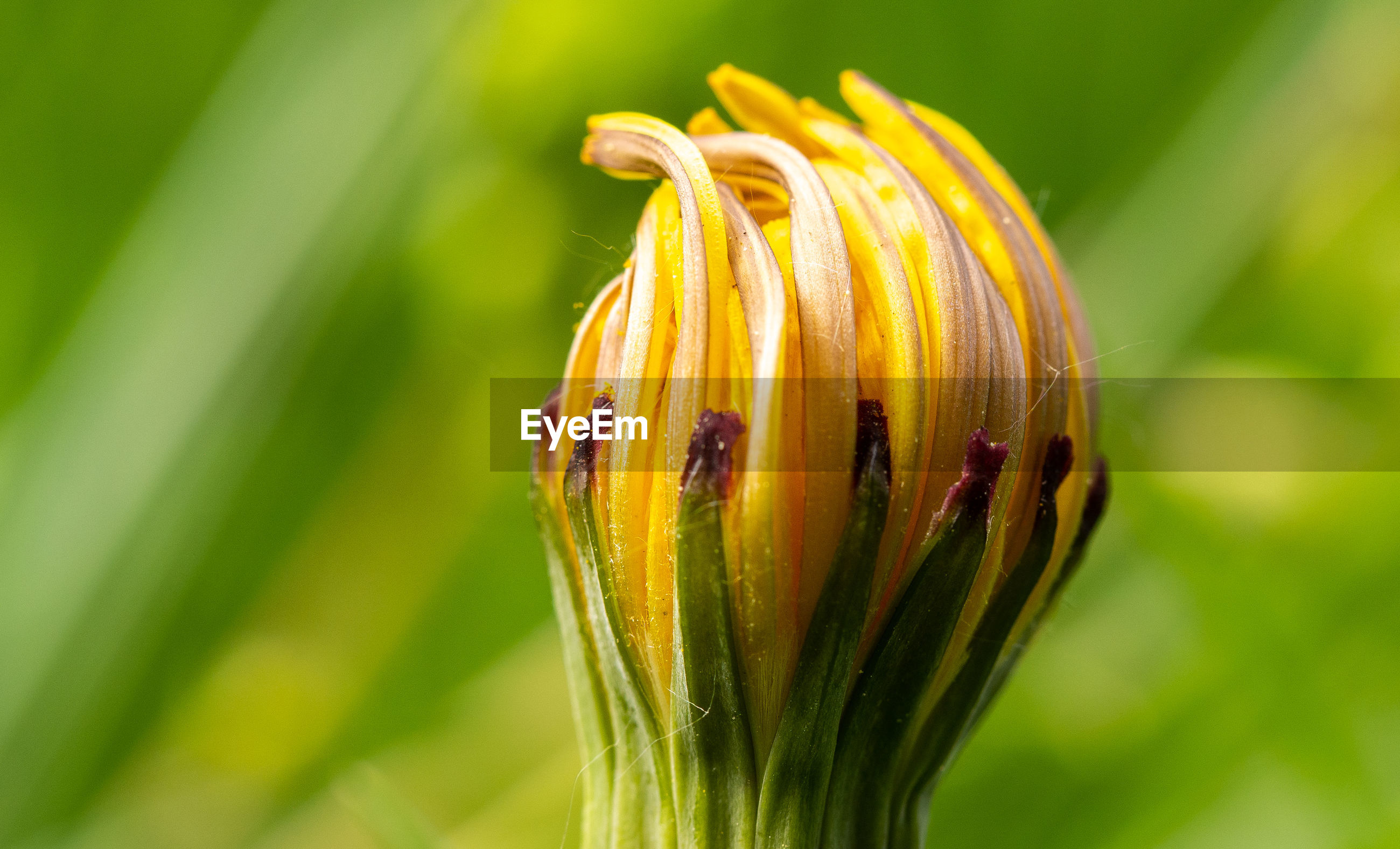 CLOSE-UP OF YELLOW BUG ON PLANT