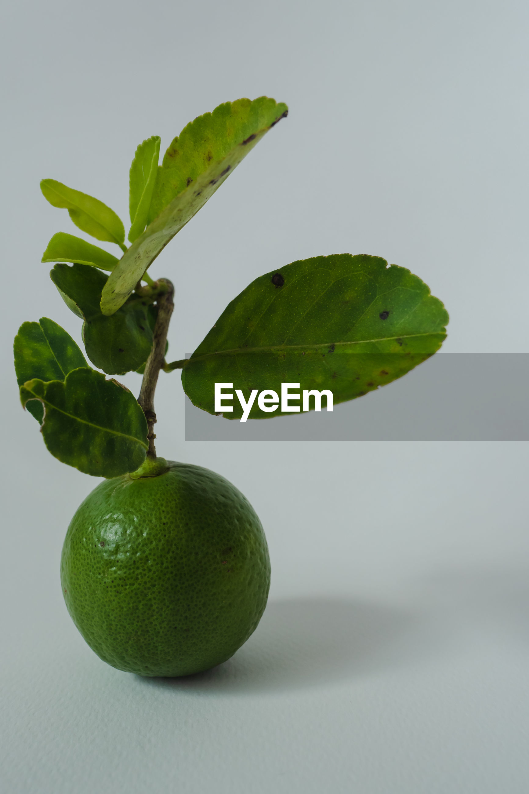 CLOSE-UP OF FRESH GREEN FRUIT AGAINST WHITE BACKGROUND