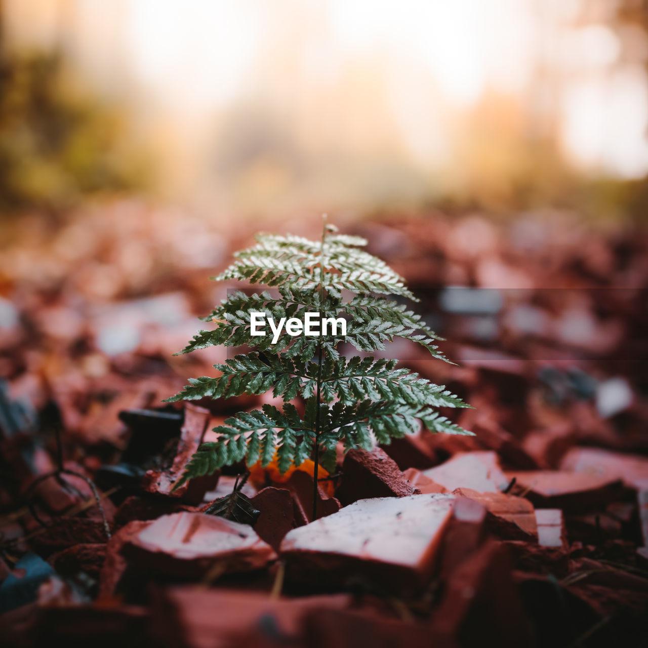 Close-up of fern in autumn