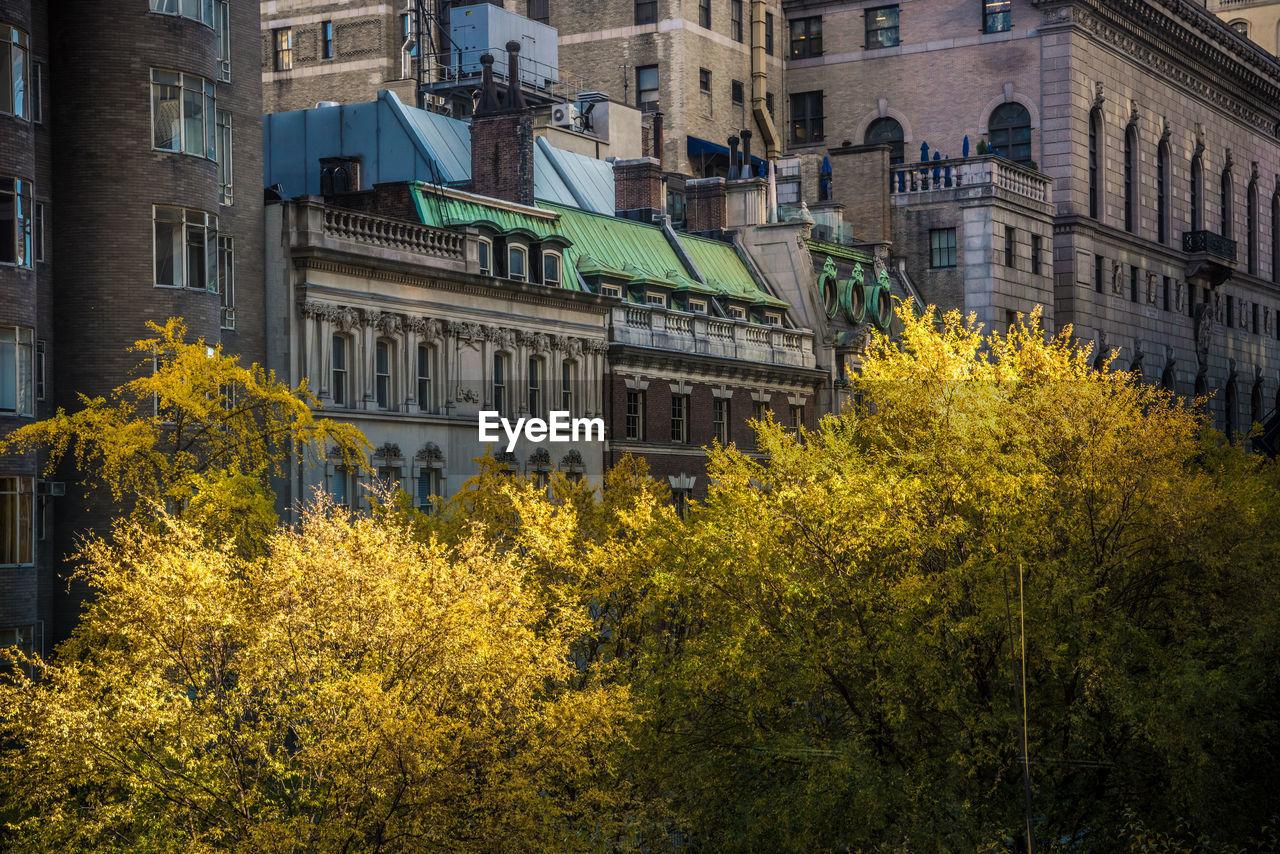 Trees against buildings in city