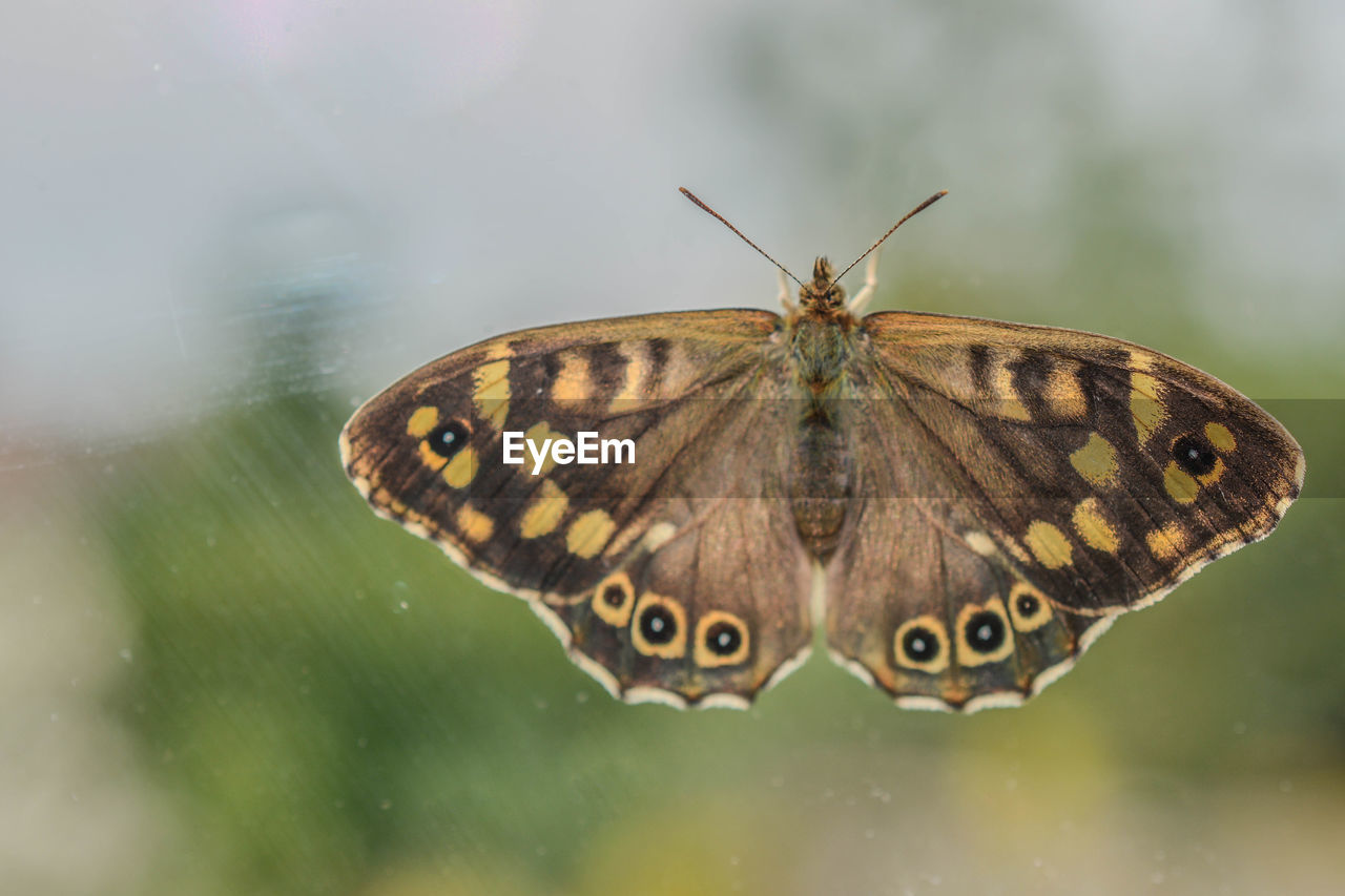 Close-up of butterfly on glass