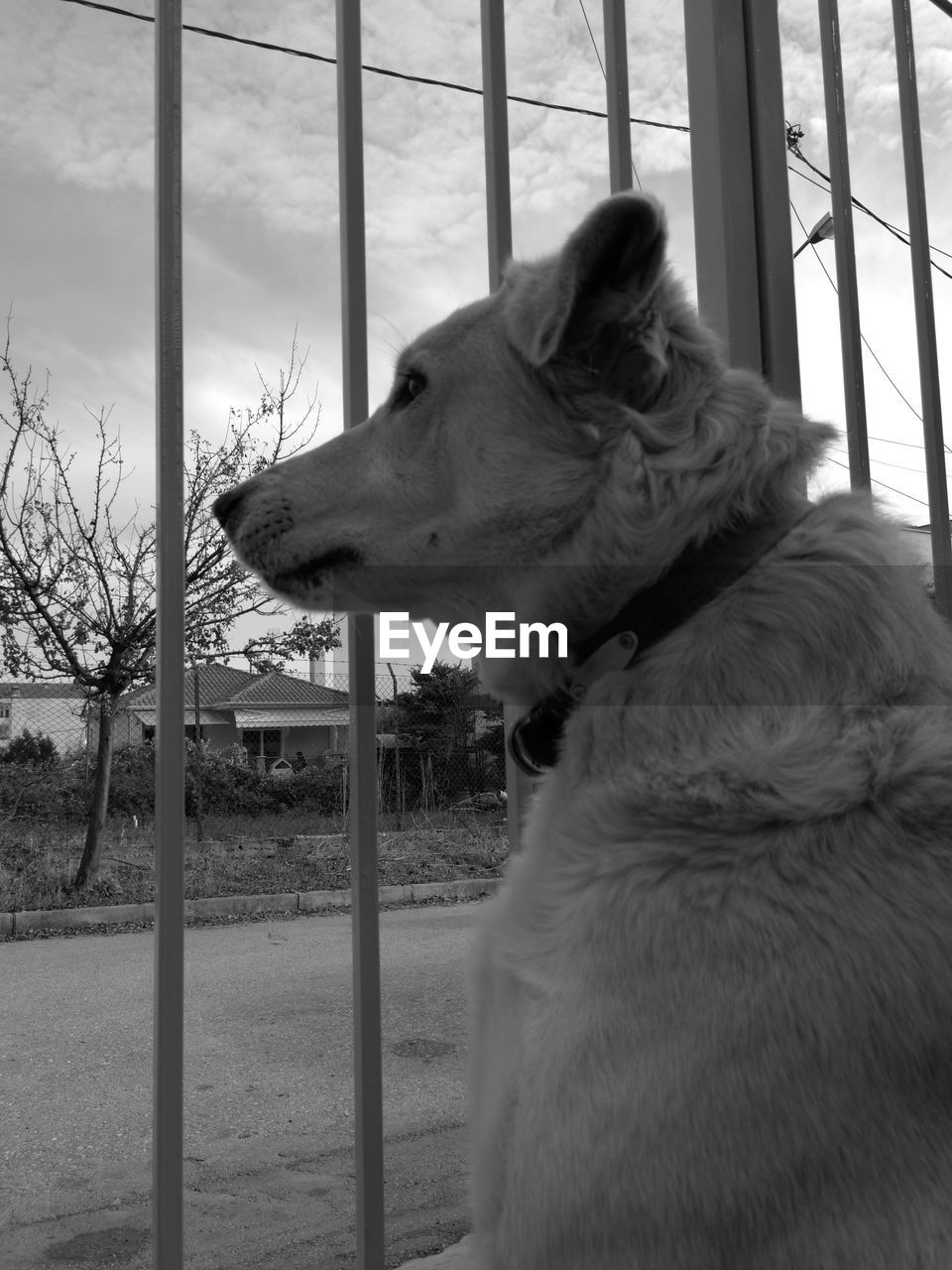 one animal, domestic animals, domestic, pets, mammal, animal themes, animal, vertebrate, canine, dog, looking, looking away, no people, day, close-up, window, field, nature, outdoors, sky, animal head