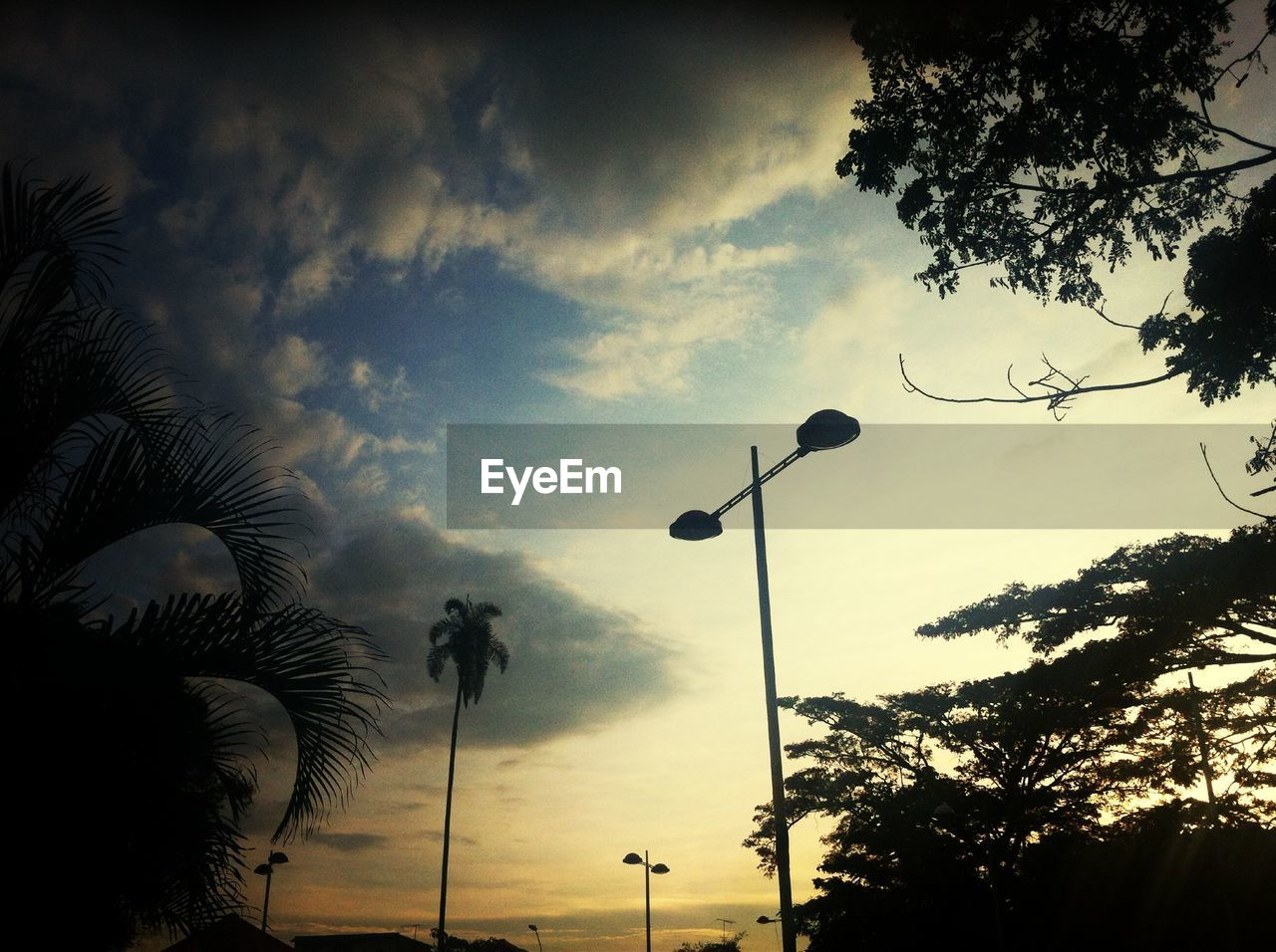 tree, silhouette, low angle view, street light, sky, sunset, cloud - sky, outdoors, palm tree, nature, no people, beauty in nature, scenics, growth, day