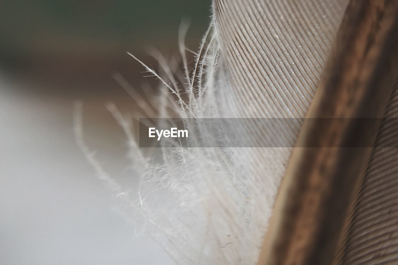 selective focus, close-up, feather, softness, fragility, lightweight, vulnerability, no people, nature, white color, plant, day, outdoors, beauty in nature, pattern, brown, focus on foreground, still life, hair, textile