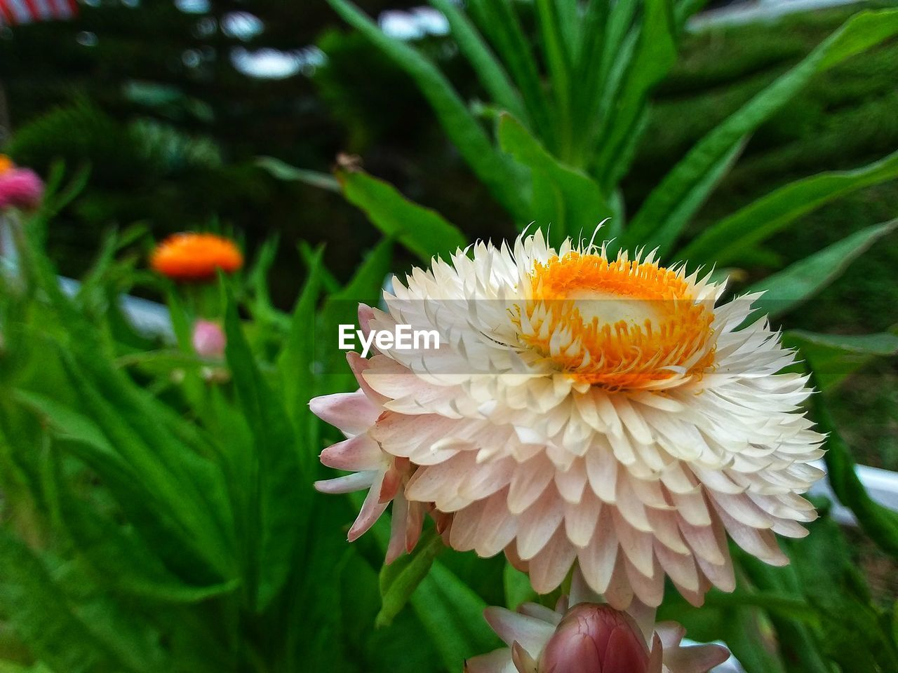 flowering plant, flower, plant, beauty in nature, vulnerability, freshness, fragility, petal, growth, close-up, flower head, inflorescence, nature, focus on foreground, green color, orange color, day, no people, leaf, invertebrate, pollen, pollination